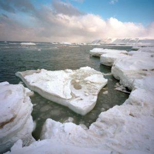 © Wim VAN PASSEL / WWF-Canon